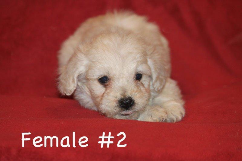 female2d.jpg