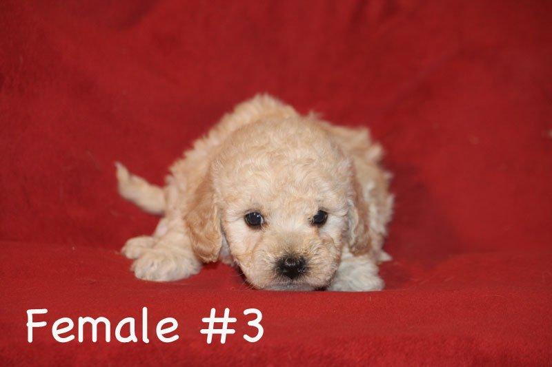 female3d.jpg
