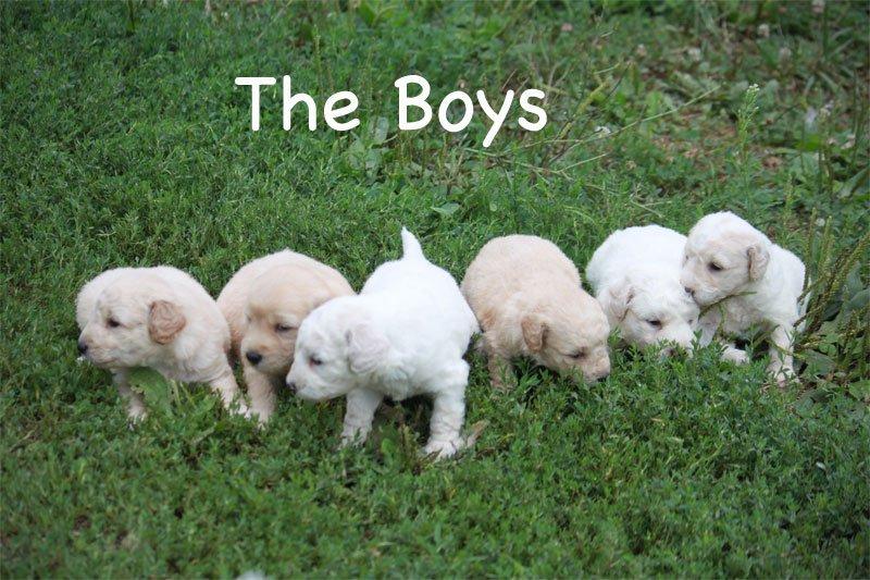 boys1a