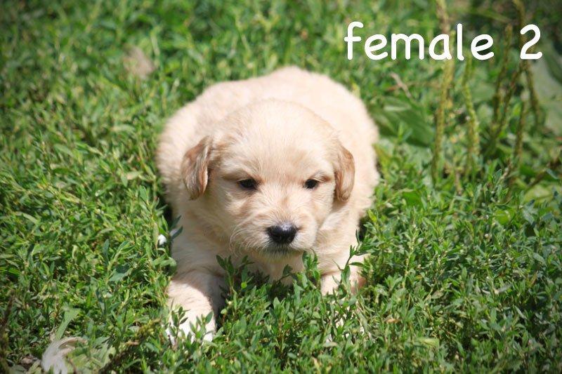 female2