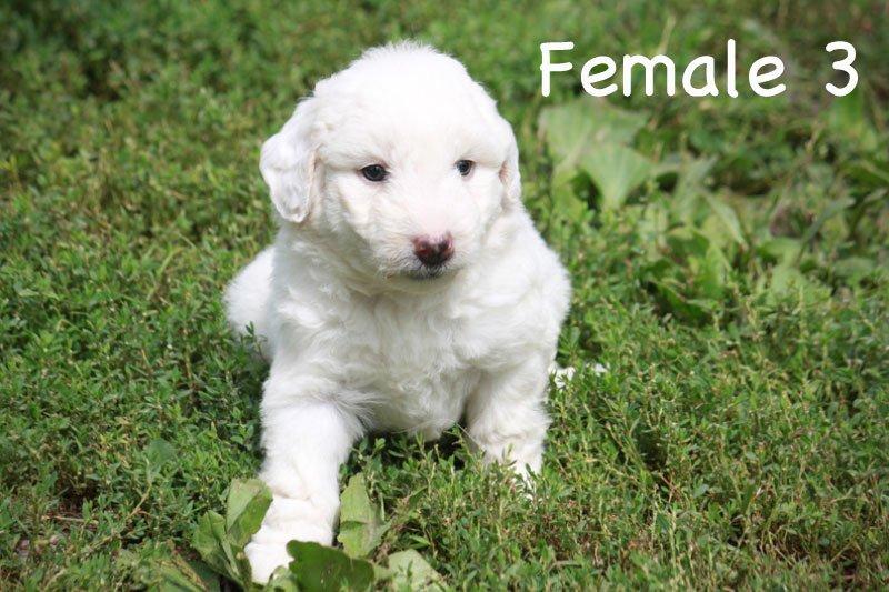 female3c