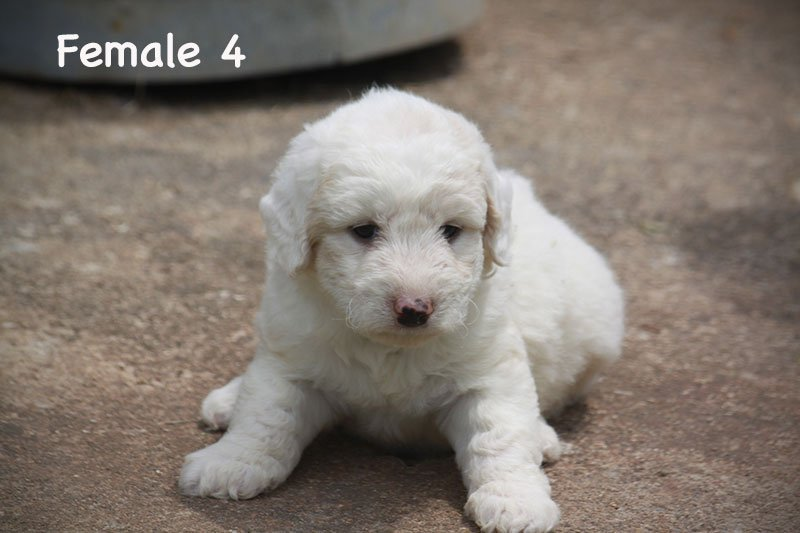 female4b